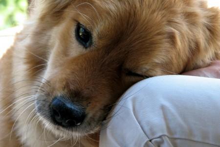 Мальчик и его пес
