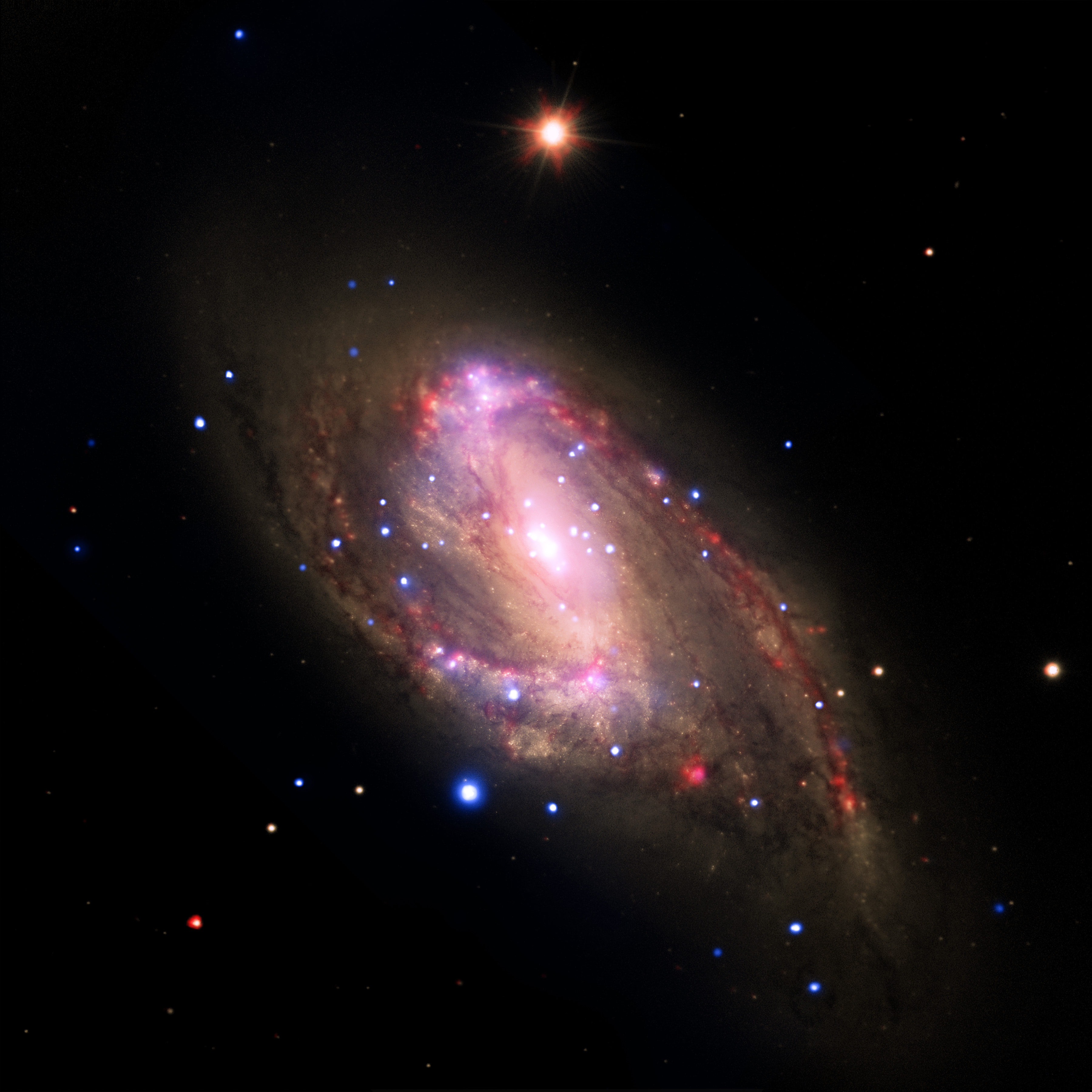 This multiwavelength image of the galaxy NGC 3627 contains X-rays from Chandra (blue), infrared data from Spitzer (red), and optical data from Hubble and the Very Large Telescope (yellow).  Astronomers conducted a survey of 62 galaxies, which included NGC 3627, to study the supermassive black holes at their centers.  Among this sample, 37 galaxies with X-ray sources are supermassive black hole candidates, and seven were not previously known. Confirming previous Chandra results, this study finds the fraction of galaxies hosting supermassive black holes is much higher than in optical searches for black holes that are relatively inactive.