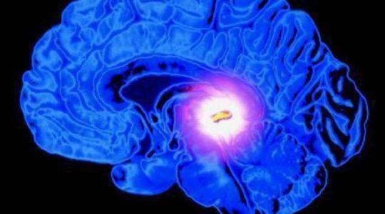 Шишковидное тело — квантовый компьютер в головном мозге